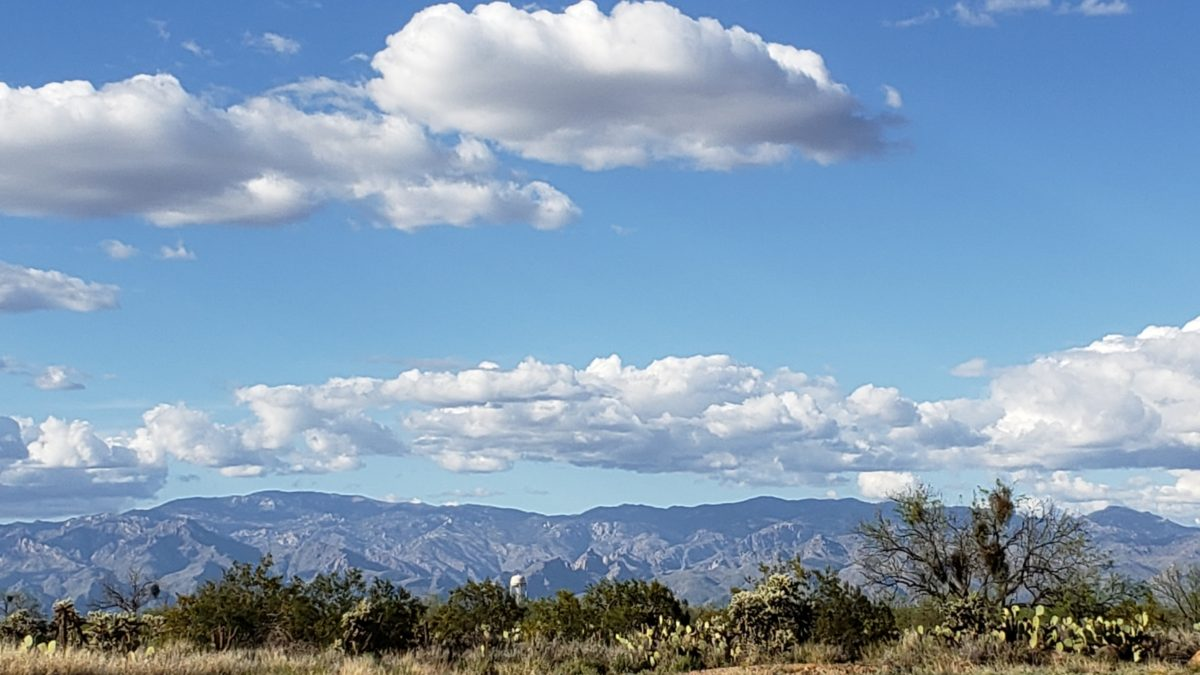 From Saguaro to Fir Trees: A Visit to Mt. Lemmon